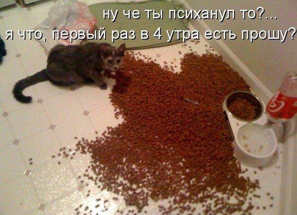 http://cs14113.vk.me/c312925/v312925447/5107/pdqp8ye1gpE.jpg