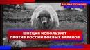 Швеция использует против России боевых баранов (Руслан Осташко)