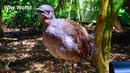 Funny Birds Imitate iPhone Gun Alarm Cat Dog Cute Baby Parrot Bird Videos Singing Parrots Video
