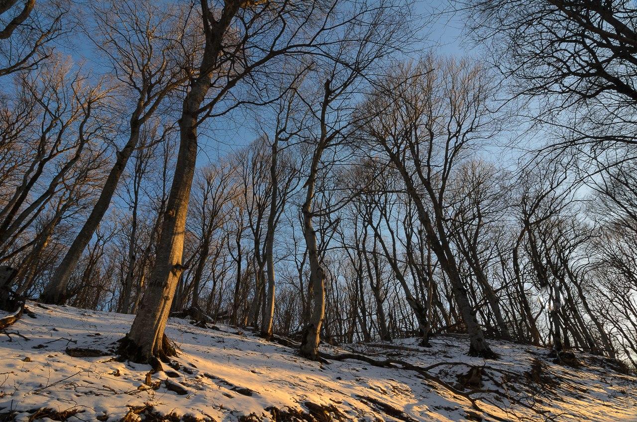 Буковый лес на Бештау