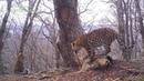 ID3872/НП Земля леопарда/Тигр, леопард и еще 11 зверей у одного дерева