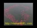 Fish swim in the shape of the heart in Sanya, Hainan Island, China Рыбы плавают в форме сердца в Санья, остров Хайнань, Китай