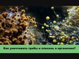 Как уничтожить грибы и плесень в организме?