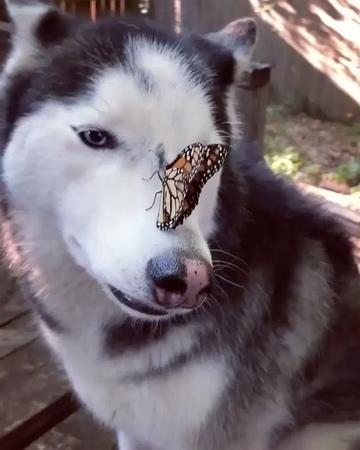 """Selen Öztürk on Instagram """"🤗... float like a butterfly ...👊 🦋 kafası karışmak , neye uğradığını şaşırmak , asla anlam verememek ve eylemsiz kalaka..."""
