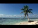 ЗВУКИ МОРЯ 3 часа Видео Тропический пляж с голубым небом, белым песком и пальмо