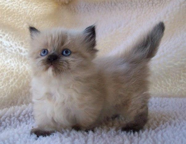 Более нежного и милого создания, чем кошка, трудно себе представить...