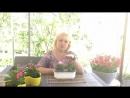 Бальзамин обычное чудо Выращивание mp4