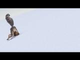 Отрывок из мультфильма Ледниковый период