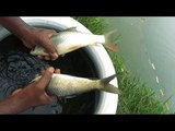 Minnow Collection And Keep it Alive In The Pot, Fishing &amp Farming In Bangladesh