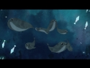 Песнь моря | Song of the Sea