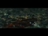 Становление легенды / Huang Feihong Zhi Yingxiong You Meng (2014) - Трейлер