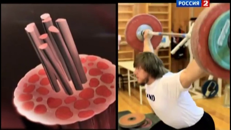 Д ф Технологии спорта тяжелая атлетика