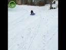 Собака катается на ледянке
