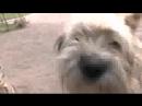 001_да уж..любимых собак певца пророка сан боя..рыжика и бельчика больше нет.горько и досадно