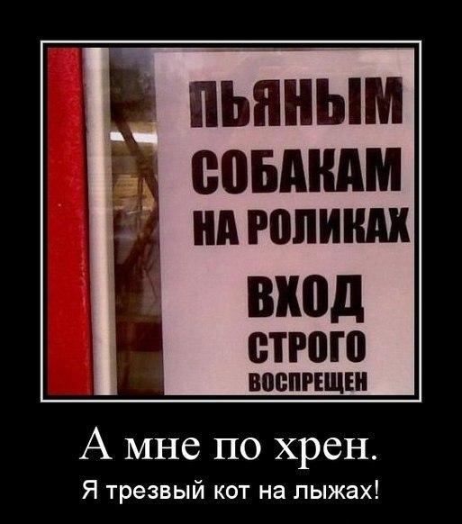 http://cs14115.userapi.com/c7008/v7008994/1e26/U9IF3mPPlWI.jpg