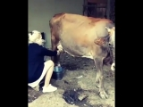 Азербайджанка с города показывает как доить корову в деревне. Азербайджан Azerbaijan Azerbaycan БАКУ BAKU BAKI Карабах 2018 HD