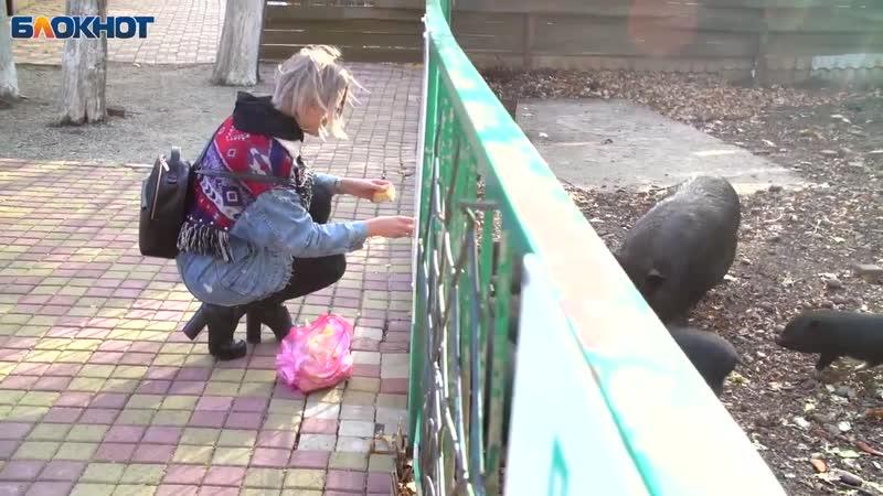 Ставропольский зоопарк » Freewka.com - Смотреть онлайн в хорощем качестве