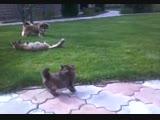 Котенок защищает маму Мусю