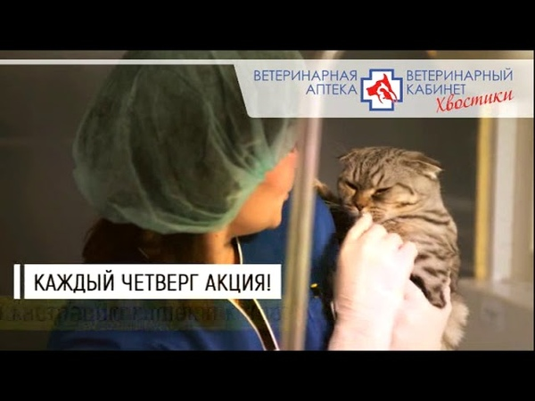 Хвостики 12 10 12 11 Нижнеудинск