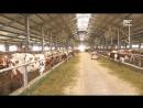 Карельские сельхозпредприятия наращивают объемы производства молока