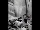 Крысак из мультика ратату