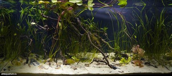 Конкурс дизайна биотопных аквариумов JBL 2014 Z5d8Q3r6iUU