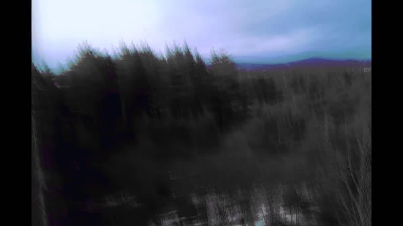 BLACK RAINBOW - blue light of trees