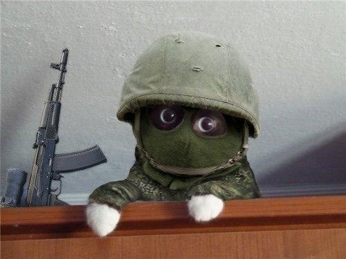 кот сепаратист
