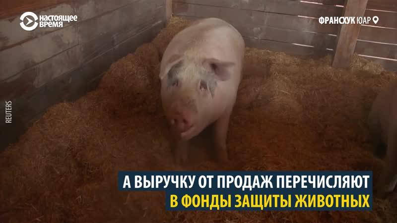 свинья рисует картины