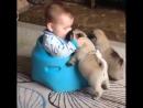 Говорят, что собаки - лучший друг человека, мы говорим, что они семья