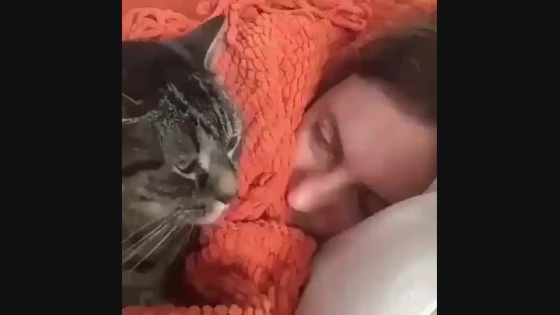 кот-будильник