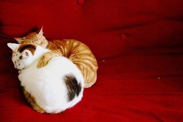 Кошки и прочие забавные животные  - Страница 3 1gb67ZnLMjk
