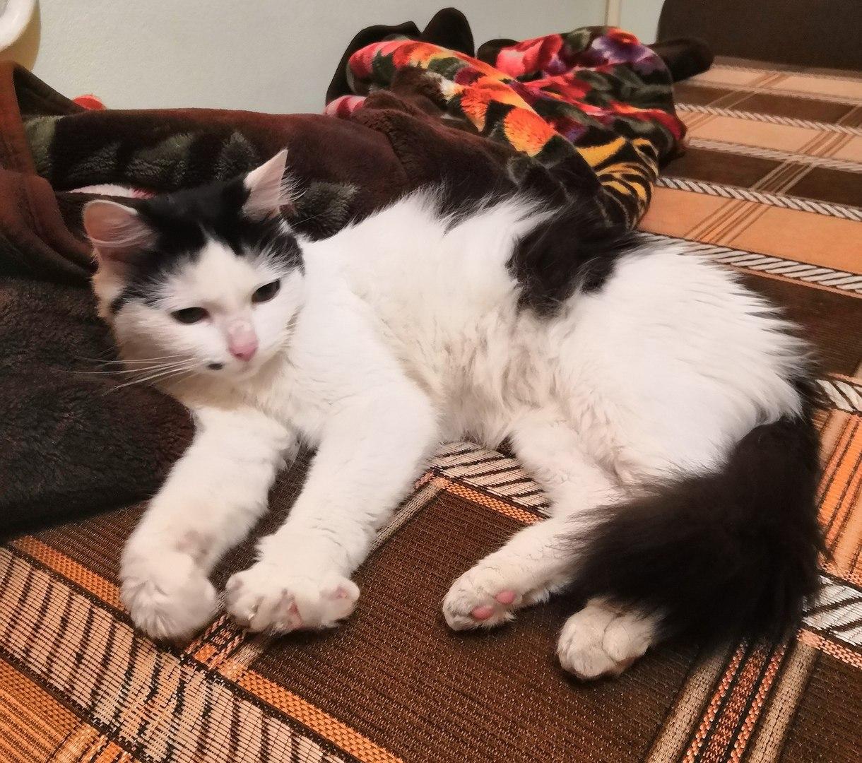 Кошка-путешественница: домашний питомец из Савеловского был найден у офиса Mail.Ru