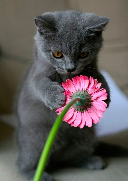 смешные котята: