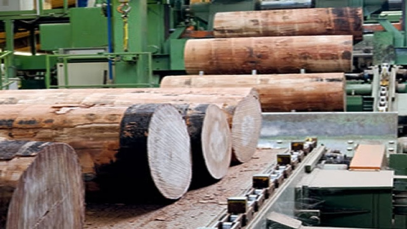 實拍木材加工廠加工大原木過程,再大的木頭也能輕松處理