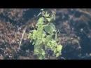 Natural Spirit -- Славянская колыбельная
