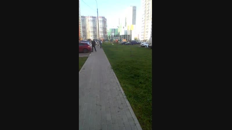выгул собак на детской площадке.mp4