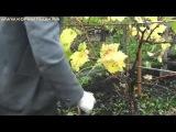 Технология выращивания винограда   ч 9