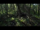 Лесной Танец - Таёжное царство (официальное видео 2018) [4K]
