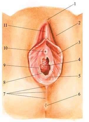 разновидность половых губ порно фото
