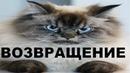 Ну очень злые коты - возвращение