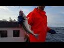 Настоящая атлантическая рыбалка. Фарерские острова, лето 2018.
