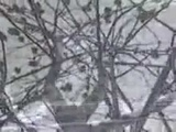 Веня Д'ркин - Зимний блюз