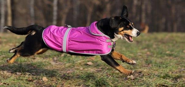 OSSO Fashion - лучшие товары для животных,дрессировки,спорта Z9WaAZRdaI0
