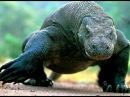 Самые опасные животные мира - Шокирующая информация –Сильные хищники – Опасные змеи.