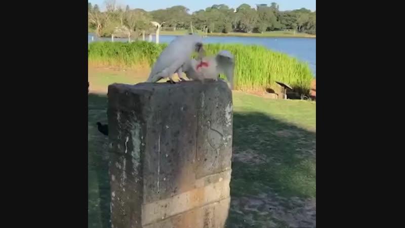 Папугаий