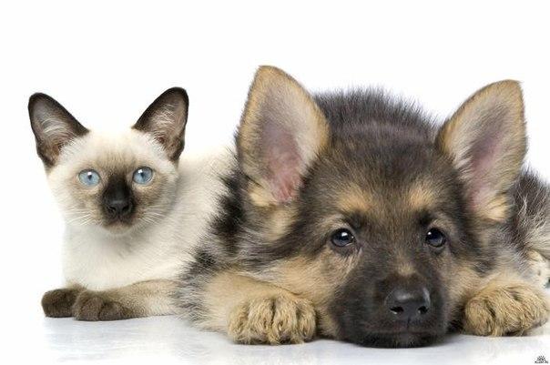 Кіт і собака