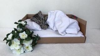 Неугомонный котёнок / Restless kitten