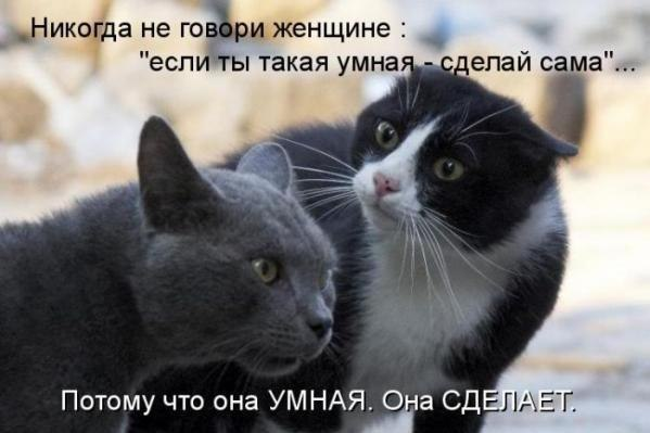Кошачий юмор - Страница 2 1jY-ZAk5EZc