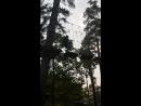 Тарзан-парк 6